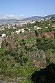 Madeira 17 - View across gorge from the Botanical Gardens.jpg