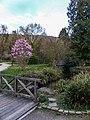 Magniolienblüte im Watthalden - Park in Ettlingen, Albtal - panoramio (2).jpg