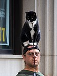 Man with a Cat on his head - Manhattan (6179412197).jpg
