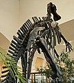 Mandschurosaurus Amurensis..2H1A0338WI.jpg
