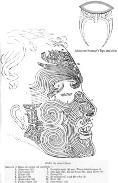 Moko Wikipedia Wolna Encyklopedia