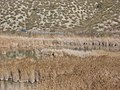 Mar de Ontígola - panoramio.jpg