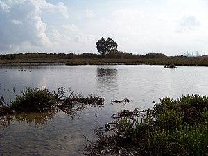 Marismas del río Palmones 03.JPG