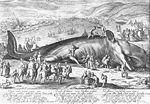 Matham, Jacob - Der am 3. Februar 1598 bei Katwijk gestrandete Potwal - 1598.jpg