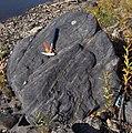 McMurray Fm boulder.jpg