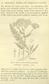 Medicinal Herbs Poisonous Plants-151.png
