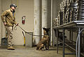 Military working dogs sniff out narcotics, explosives 150213-A-DZ999-579.jpg