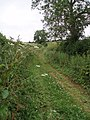 Mill lane track - geograph.org.uk - 191595.jpg