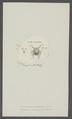 Monoculus bracteatus - - Print - Iconographia Zoologica - Special Collections University of Amsterdam - UBAINV0274 100 01 0010.tif