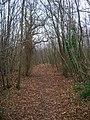 Morley Wood - geograph.org.uk - 300290.jpg