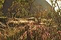 Morning Rays at Ayers Rock - panoramio.jpg