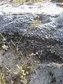 Mount Herschel, Rottnest-6.jpg