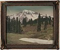 Mount Rainier from Paradise Meadows, Washington, 1919 (WASTATE 2924).jpeg