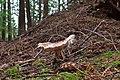Mount Seymour Provincial Park, BC (DSCF8864).jpg