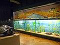 Musée zoologique de Strasbourg-Tortues (1).jpg