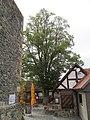 ND 634.227, Linde 1, 1, Homberg (Efze), Schwalm-Eder-Kreis.jpg