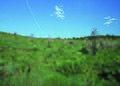 NRCSCO01015 - Colorado (1421)(NRCS Photo Gallery).jpg