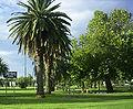 Narromine - Dundas Park.jpg