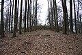 Natural reservation Skocicky hrad in winter (15).JPG