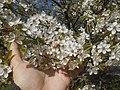 Nature in Smolensk - 24.jpg