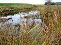 Natuurgebied De Twigen 03.JPG