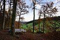 Neunkirchen (Baden) - Illsberg - Waldweg-Kreuzung unterhalb Minneburg - Blick nach SO 1.jpg