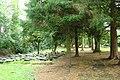Newer graves buiral ground.jpg