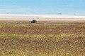 Ngorongoro 2012 05 30 2517 (7500993496).jpg