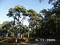 Norleywood Inclosure, New Forest National Park, Hants - geograph.org.uk - 74349.jpg