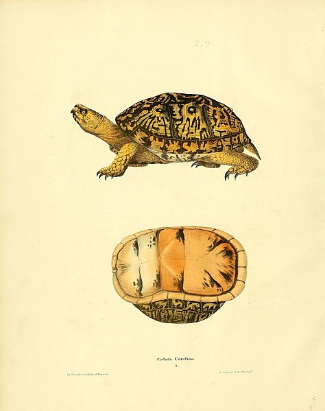 File:North American herpetology, or, A description of the reptiles inhabiting the United States (6075906203).jpg