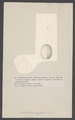 Nucleolites amygdala - - Print - Iconographia Zoologica - Special Collections University of Amsterdam - UBAINV0274 007 02 0009.tif