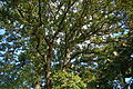 Oak tree at Tualatin River Nation Wildlife Refuge.JPG