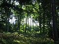 Oakwoods, Sunny Gutter. - geograph.org.uk - 53394.jpg
