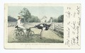 Oliver W., Famous Trotting Ostrich, Calif (NYPL b12647398-66340).tiff