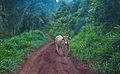 On the Misiones road, Argentina, 9th. Jan. 2011 - Flickr - PhillipC.jpg