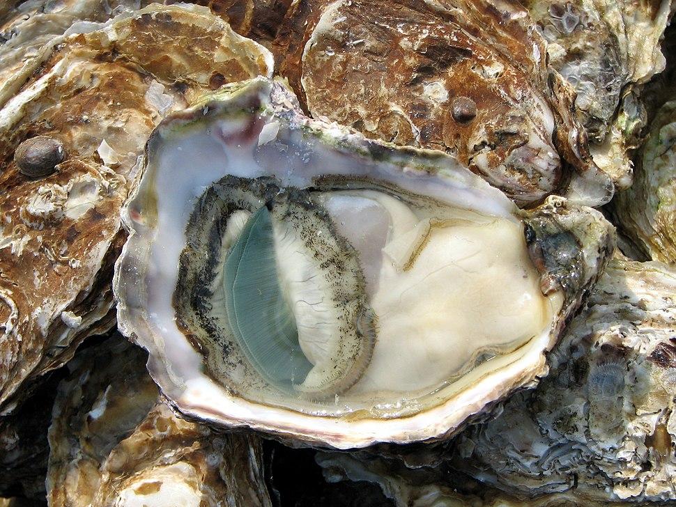 Open Oyster Lyon market