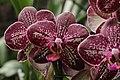 Orchid (33342244991).jpg