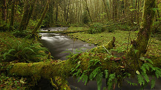 Rock Creek Wilderness - Image: Oregon Rock Creek Wilderness 1 Greg Lief