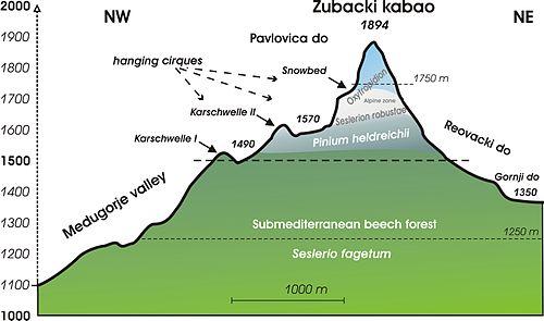 Höhenstufe (Ökologie) – Wikipedia