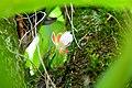 Orquídea em galhos de árvore.jpg