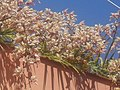 Orquideas - panoramio (2).jpg