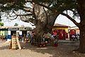 Ouidah-Baobab sur la place Agoli.jpg