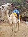 Ourika camel.jpg