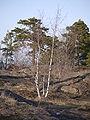 Oxelösund - P1290566.JPG