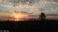 Pôr-do-Sol iluminando a plantação de Cana-de-Açucar.png