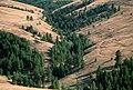 PINE FOREST BY UKIAH OREGON-UMATILLA (25115896459).jpg