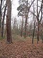 PP Černý orel, les VI.jpg
