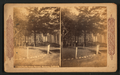 Pacific Grove Retreat, Monterey, California, by Continent Stereoscopic Company.png