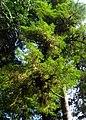 Pacific Rim National Park - Rainforest Trail (3671482072).jpg