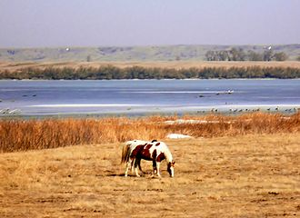 "Lower Brule Indian Reservation - Two ""painted horses"" grazing near the Missouri River on the Lower Brule Indian Reservation"